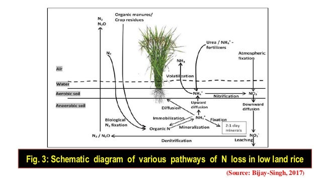evaluation of soil management strategies in Summary management to optimise nutrient recycling and the maintenance of all aspects of soil fertility include: the use of carefully planned rotations .