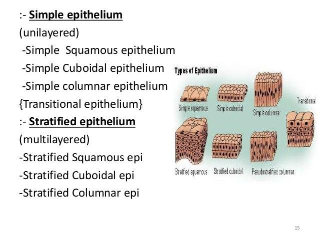 Epithelium in General