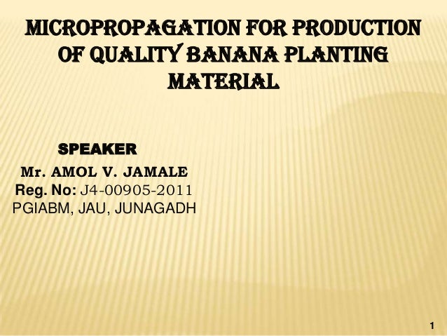 MICROPROPAGATION FOR PRODUCTION    OF QUALITY BANANA PLANTING             MATERIAL     SPEAKER Mr. AMOL V. JAMALEReg. No: ...