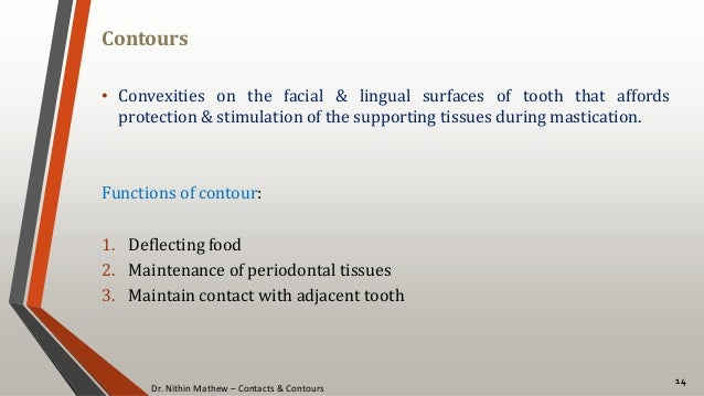 Dr. Nithin Mathew – Contacts & Contours Contours 14 • Convexities on the facial & lingual surfaces of tooth that affords p...