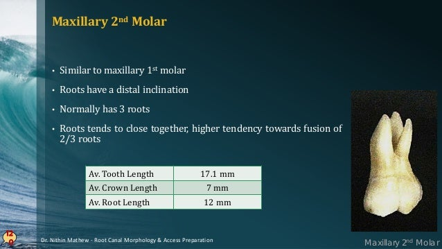 121 PULP CHAMBER • Similar to maxillary 1st molar, except narrower mesiodistally • Roof – Rhomboidal in shape • Floor – ob...