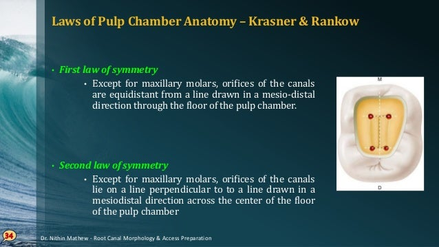 Laws of Pulp Chamber Anatomy • Law of color change • Color of the pulp chamber floor is always darker than the walls 35 • ...