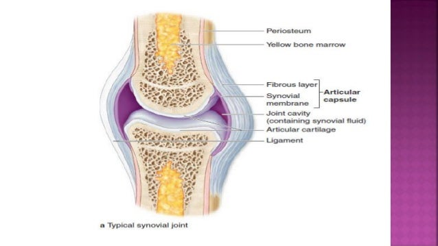 Seminar Approach To Joint Pain