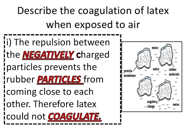 Describe the coagulation of latex when exposed to air ...