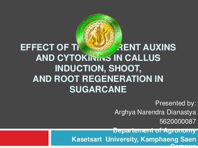EFFECT OF THE DIFFERENT AUXINS AND CYTOKININS IN CALLUS INDUCTION, SHOOT, AND ROOT REGENERATION IN SUGARCANE Presented by:...