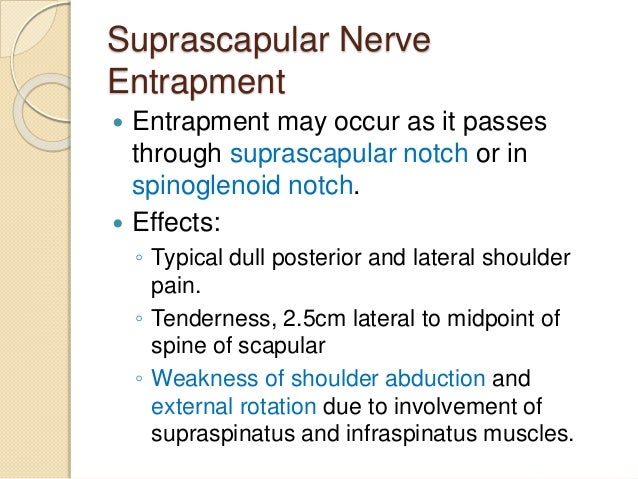 Median Nerve Injury at Wrist   Effects:  ◦ Ape-hand Deformity  ◦ Loss of cutaneous sensations over palmar  surface of lat...