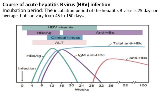 Natural History Of Acute Hepatitis B