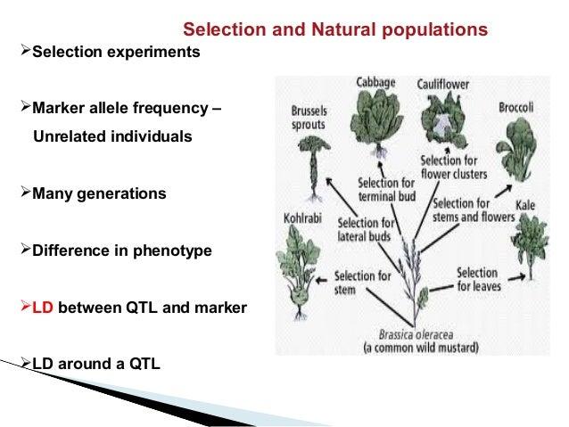 MAGIC :Multiparent advanced generation intercross and  QTL discovery  Slide 3