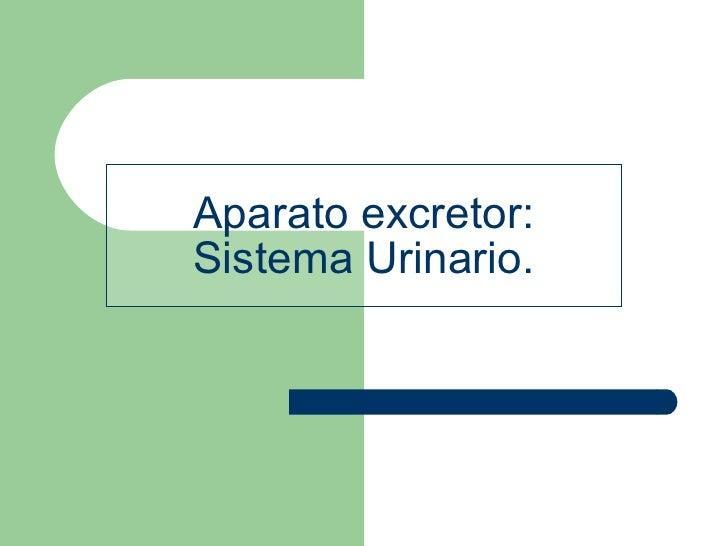 Aparato excretor: Sistema Urinario.