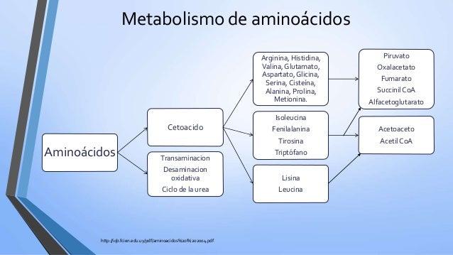 test metabolismo reseñas