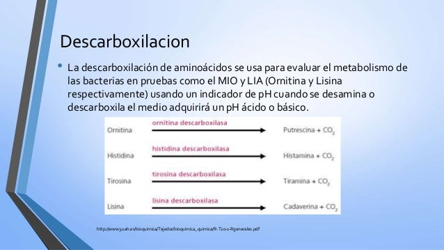 la paroxetina cambia el metabolismo mujeres