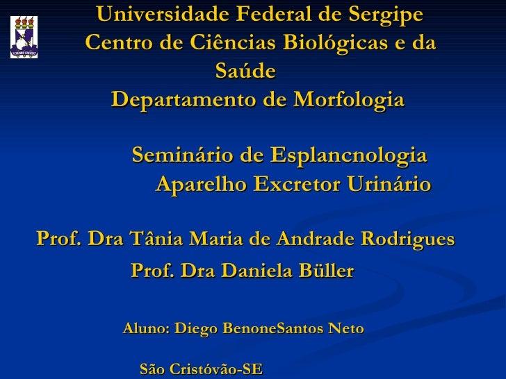 Universidade Federal de Sergipe   Centro de Ciências Biológicas e da Saúde   Departamento de Morfologia     Seminário de...