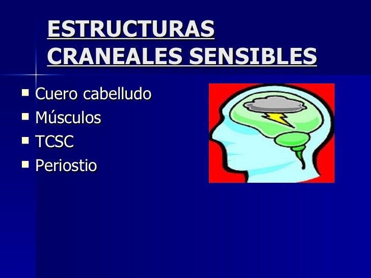 ESTRUCTURAS CRANEALES SENSIBLES <ul><li>Cuero cabelludo </li></ul><ul><li>Músculos </li></ul><ul><li>TCSC </li></ul><ul><l...