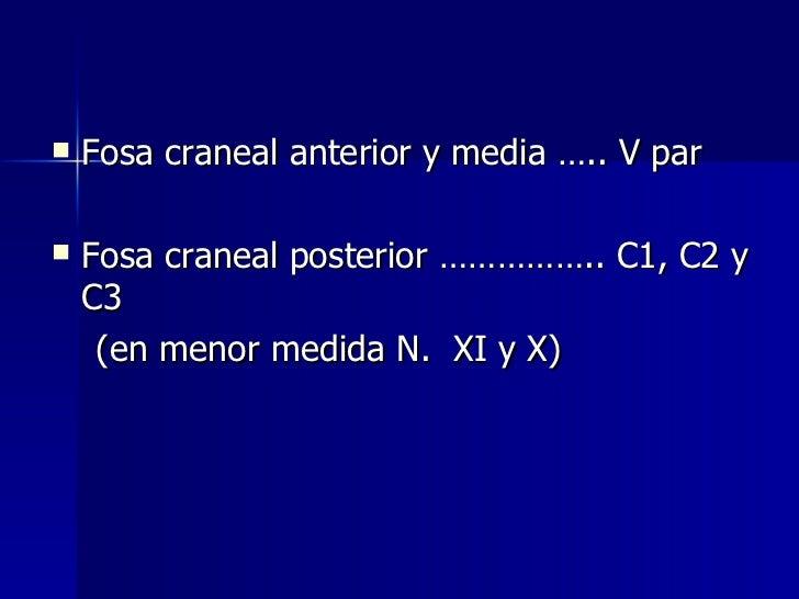 <ul><li>Fosa craneal anterior y media ….. V par </li></ul><ul><li>Fosa craneal posterior …………….. C1, C2 y C3 </li></ul><ul...