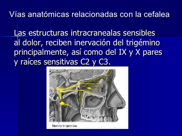 <ul><li>Las estructuras intracranealas sensibles al dolor, reciben inervación del trigémino principalmente, así como del I...