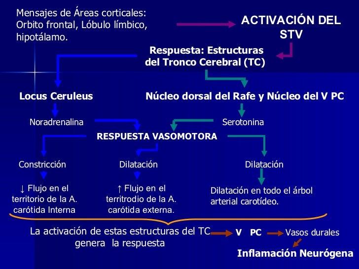 Mensajes de Áreas corticales: Orbito frontal, Lóbulo límbico, hipotálamo. ACTIVACIÓN DEL STV Respuesta: Estructuras del Tr...