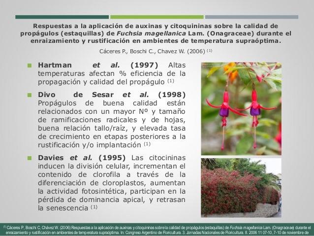 Efecto de la aplicaci n de hormonas pgr en cultivos de for Raices ornamentales