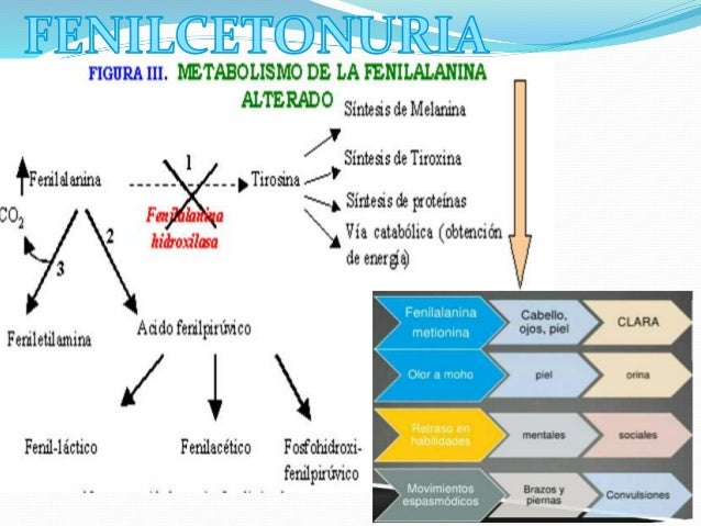 instituto metabolismo celular - Información general Un