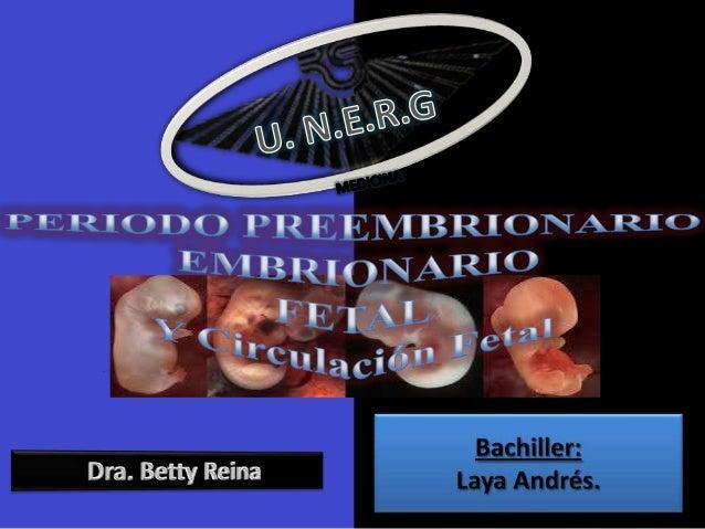 ETAPA PREEMBRIONARIA,PRENATAL PREEMBRIONARIO CIGOTO  Fusión del núcleo de un espermatozoide y núcleo del ovulo en la fecun...