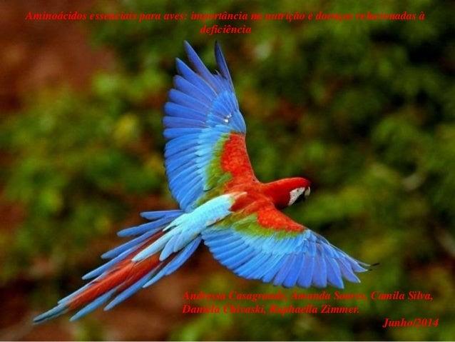 Aminoácidos essenciais para aves: importância na nutrição e doenças relacionadas à deficiência Andressa Casagrande, Amanda...