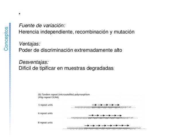 Conceptos •STRsautosómicos(microsatélites) Fuentedevariación: Herenciaindependiente,recombinaciónymutación Ve...