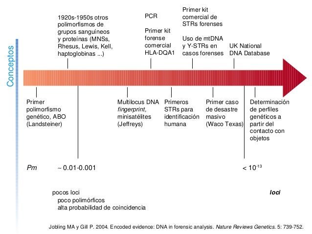 Conceptos 1900 Primer polimorfismo genético,ABO (Landsteiner) 1920 1920s1950sotros polimorfismosde grupossan...