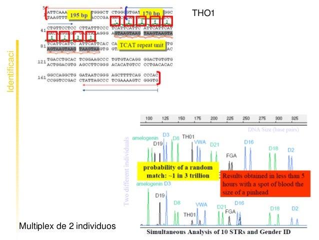 Identificaci ó n THO1 Multiplexde2individuos