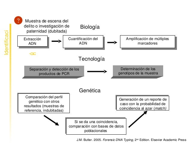 Muestradeescenadel delitooinvestigaciónde paternidad(dubitada) Extracción ADN Cuantificacióndel ADN Amplifi...