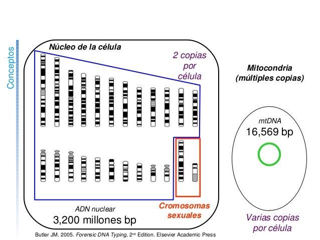 http://www.ncbi.nlm.nih.gov/genome/guide/ 123456789101112 1314...