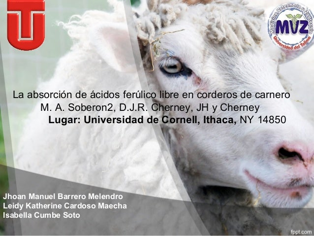 La absorción de ácidos ferúlico libre en corderos de carnero  M. A. Soberon2, D.J.R. Cherney, JH y Cherney  Lugar: Univers...