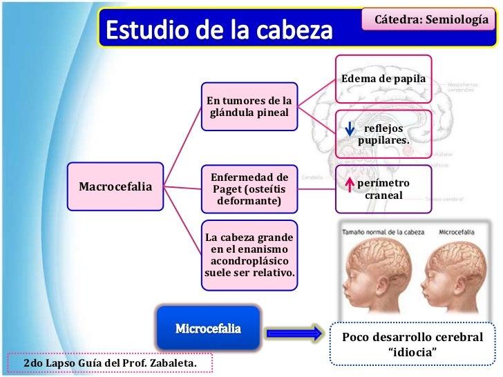 Semiologia medica argente alvarez