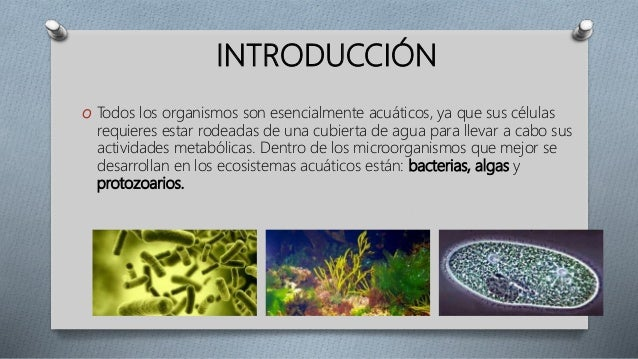 Resultado de imagen de la microflora puede incluir algas (verdes y diatomeas), hongos
