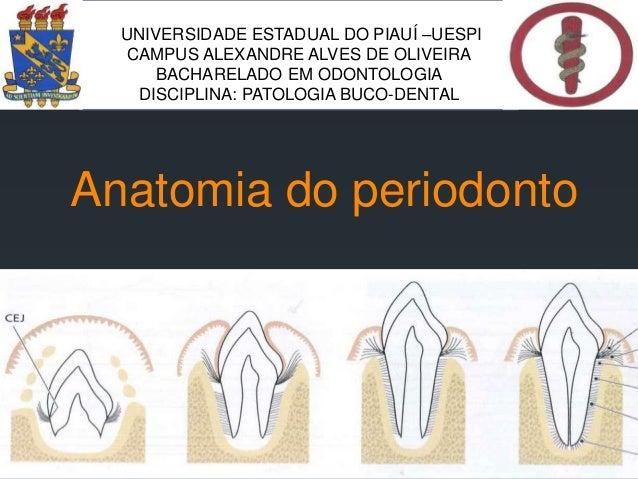Anatomia do periodonto UNIVERSIDADE ESTADUAL DO PIAUÍ –UESPI CAMPUS ALEXANDRE ALVES DE OLIVEIRA BACHARELADO EM ODONTOLOGIA...