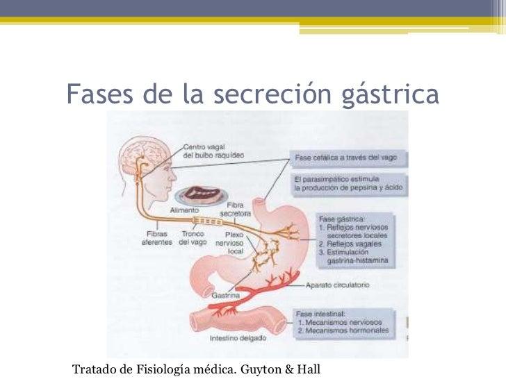 Fisiologia Humana Sherwood Pdf 28