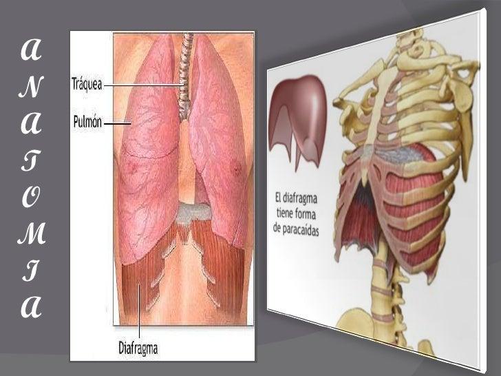 Famoso Anatomía Hernia De Hiato Viñeta - Anatomía de Las Imágenesdel ...