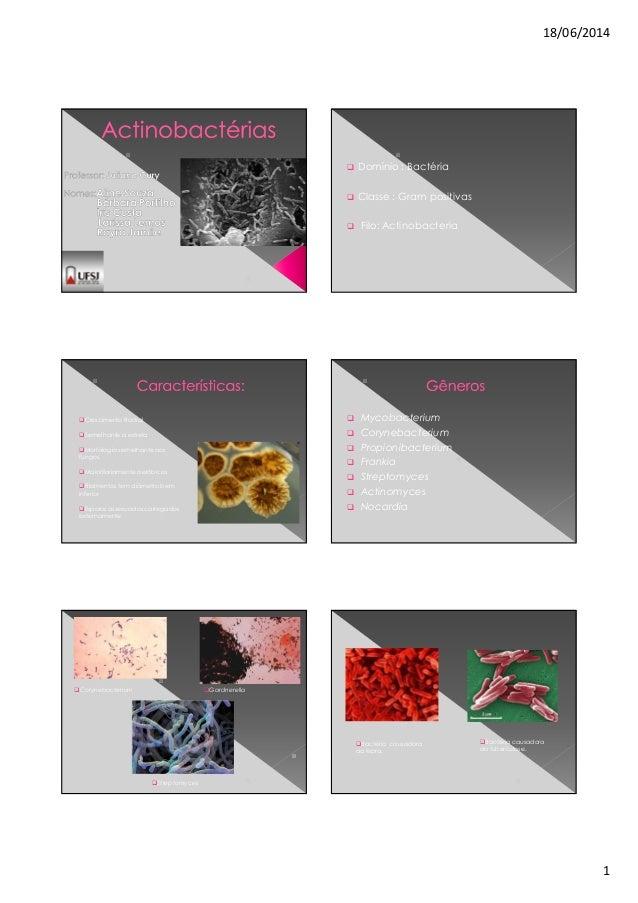 18/06/2014 1 Domínio : Bactéria Classe : Gram positivas Filo: Actinobacteria Crescimento Radial Semelhante a estrela Morfo...