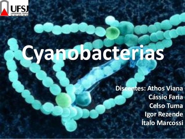 Cyanobacterias Discentes: Athos Viana Cássio Faria Celso Tuma Igor Rezende Ítalo Marcossi