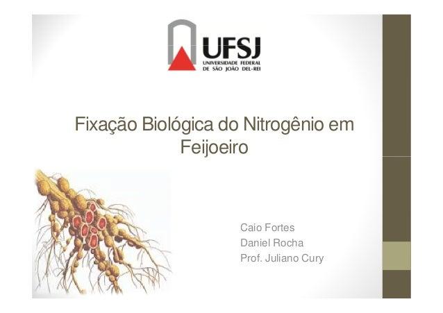 Fixação Biológica do Nitrogênio em FeijoeiroFeijoeiro Caio Fortes Daniel Rocha Prof. Juliano Cury