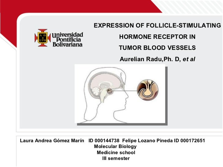 EXPRESSION OF FOLLICLE-STIMULATING HORMONE RECEPTOR IN  TUMOR BLOOD VESSELS Aurelian Radu,Ph. D,  et al Laura Andrea Gómez...