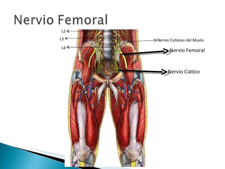 muslo anterior