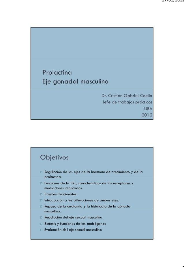 Perfecto Anatomía Masculina Eje Colección - Imágenes de Anatomía ...