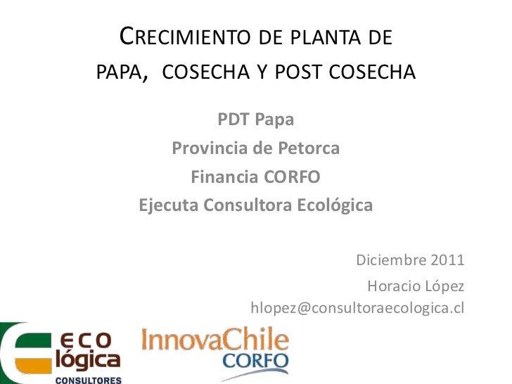 CRECIMIENTO DE PLANTA DEPAPA, COSECHA Y POST COSECHA            PDT Papa       Provincia de Petorca         Financia CORFO...