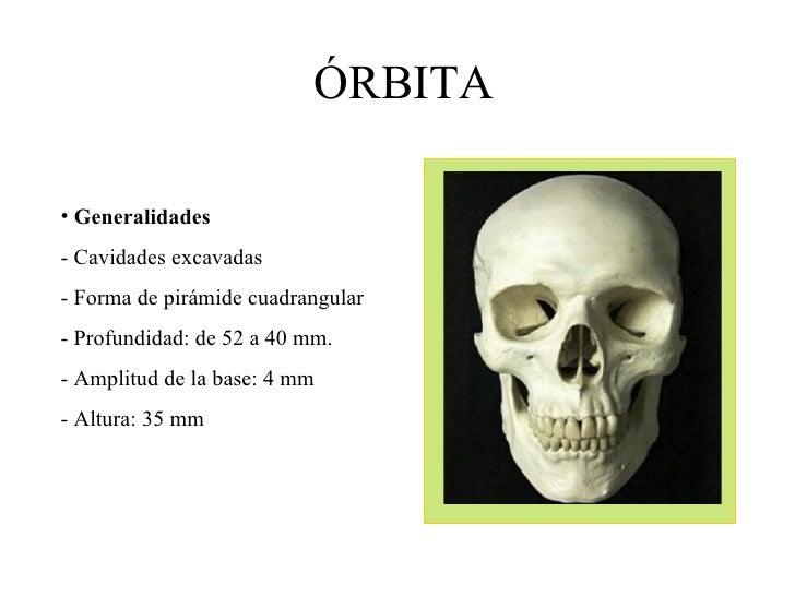 ÓRBITA <ul><li>Generalidades </li></ul><ul><li>- Cavidades excavadas </li></ul><ul><li>- Forma de pirámide cuadrangular </...