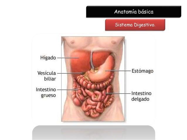 Rrx abdomen, renal y pelvis simple