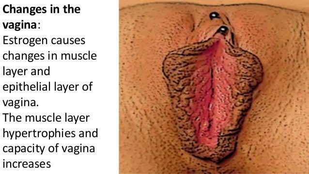 Change in pregnancy vagina
