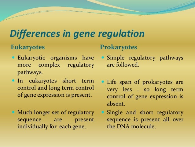 difference between gene regulation in eukaryotes Regulation of the lactase gene lactase persistence results from a mutation that changes how transcription factors interact, thereby affecting gene expression.