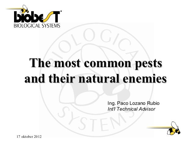 The most common pests    and their natural enemies                  Ing. Paco Lozano Rubio                  Int'l Technica...