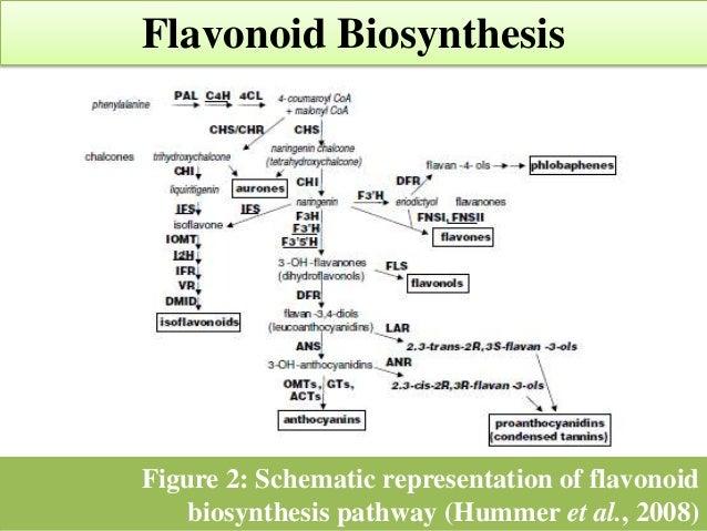 Roles Of Flavonoids In Human Health Seminar Presentation