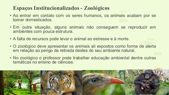 Espaços Institucionalizados - Zoológicos  • Ao entrar em contato com os seres humanos, os animais acabam por se  tornar do...