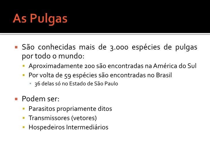 As Pulgas<br />São conhecidas mais de 3.000 espécies de pulgas por todo o mundo:<br />Aproximadamente 200 são encontradas ...